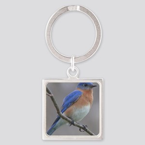 Eastern Bluebird Keychains