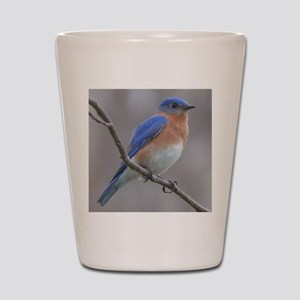 Eastern Bluebird Shot Glass