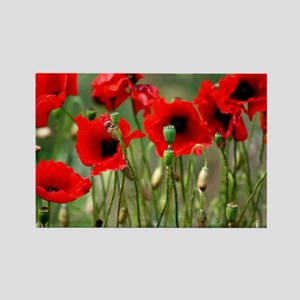 Poppy-Red Poppies Rectangle Magnet