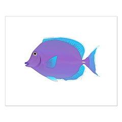 Blue tang Surgeonfish Posters