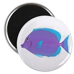 Blue tang Surgeonfish Magnets