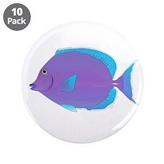 Blue tang Surgeonfish 3.5