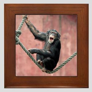 Chimpanzee001 Framed Tile