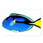 Palette Surgeonfish Regal Tang Postcards (Package