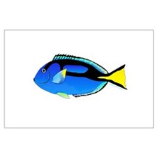 Palette Surgeonfish Regal Tang Posters