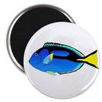 Palette Surgeonfish Regal Tang Magnets