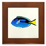 Palette Surgeonfish Regal Tang Framed Tile