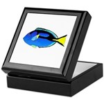 Palette Surgeonfish Regal Tang Keepsake Box