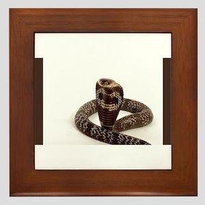 Cobra Framed Tile