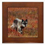 Alpha Male Wolf Framed Tile