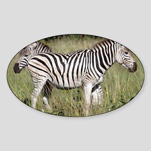 Two by Two Zebra Sticker (Oval)