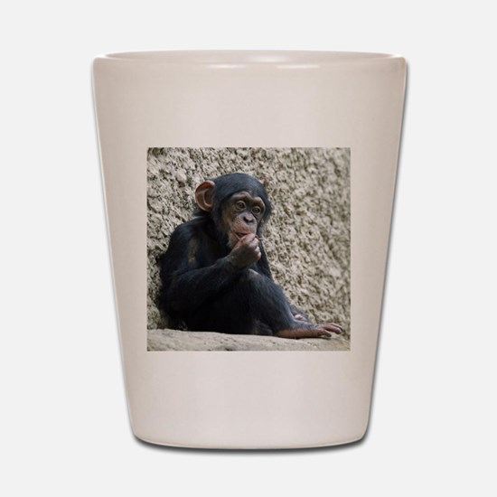 Chimpanzee003 Shot Glass