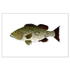 Gag Grouper Posters
