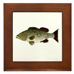 Gag Grouper Framed Tile