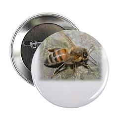 Honeybee 2.25