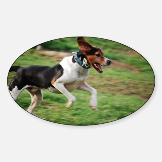 treeing walker coonhound running second Decal