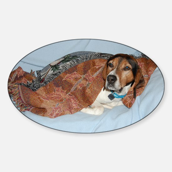 treeing walker coonhound in blanket Decal