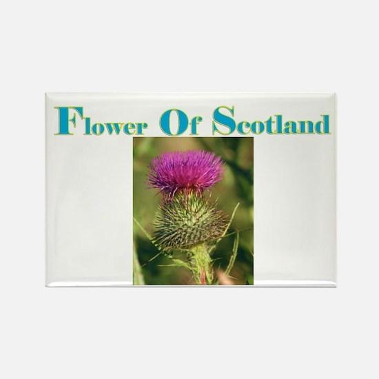 Flower Of Scotland(3) Rectangle Magnet