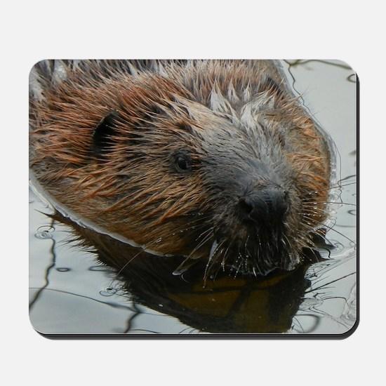 Beaver  swimming  Mousepad