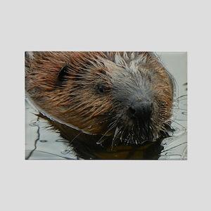 Beaver  swimming  Rectangle Magnet