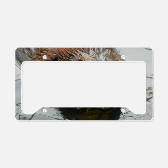 Beaver  swimming  License Plate Holder