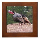 Tom Turkey Framed Tile