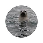 """Harbor Seal 3.5"""" Button"""
