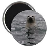 Harbor Seal Magnets