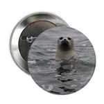 Harbor Seal 2.25