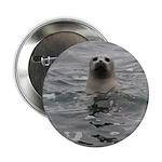 """Harbor Seal 2.25"""" Button"""