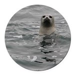 Harbor Seal Round Car Magnet