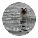 Harbor Seal Round Car Magnet