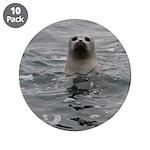 Harbor Seal 3.5