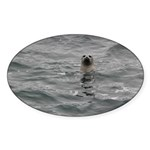 Harbor Seal Sticker