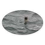 Harbor Seal Sticker