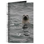 Harbor Seal Journal