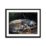Sweet Dreams Cheetah Framed Panel Print