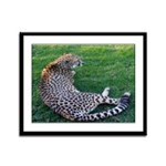 Cheetahs End of the Day Framed Panel Print