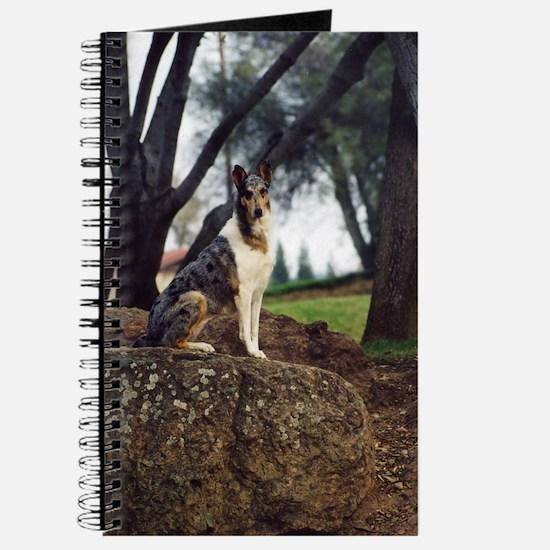 Pretty Collie Journal