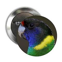 Parrot 2.25