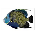 French Angelfish Postcards (Package of 8)