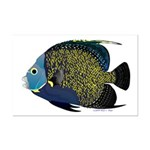 French Angelfish Posters