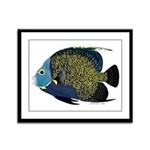 French Angelfish Framed Panel Print