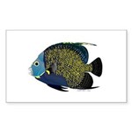 French Angelfish Sticker