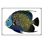 French Angelfish Banner