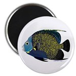 French Angelfish Magnets