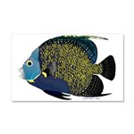 French Angelfish Car Magnet 20 x 12