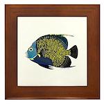 French Angelfish Framed Tile