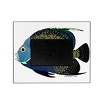 French Angelfish Picture Frame