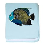 French Angelfish C baby blanket